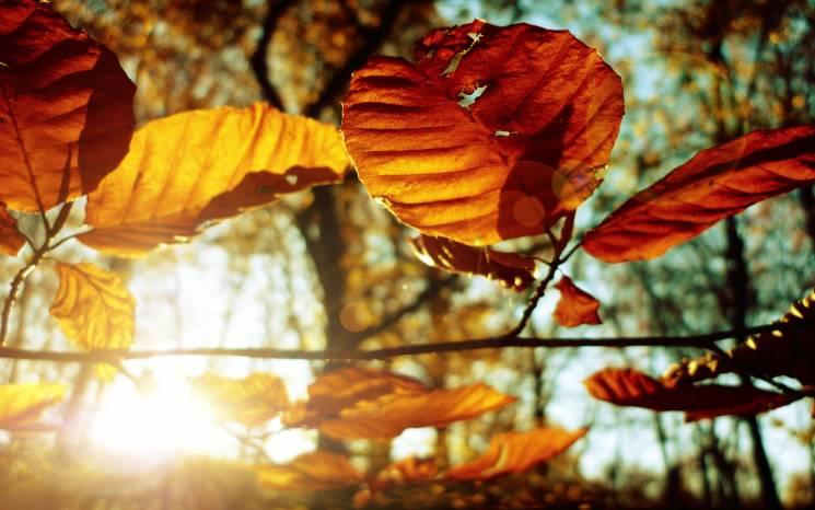 На Київ суне короткочасне потепління: Вересневе сонце пригріє до +22°С