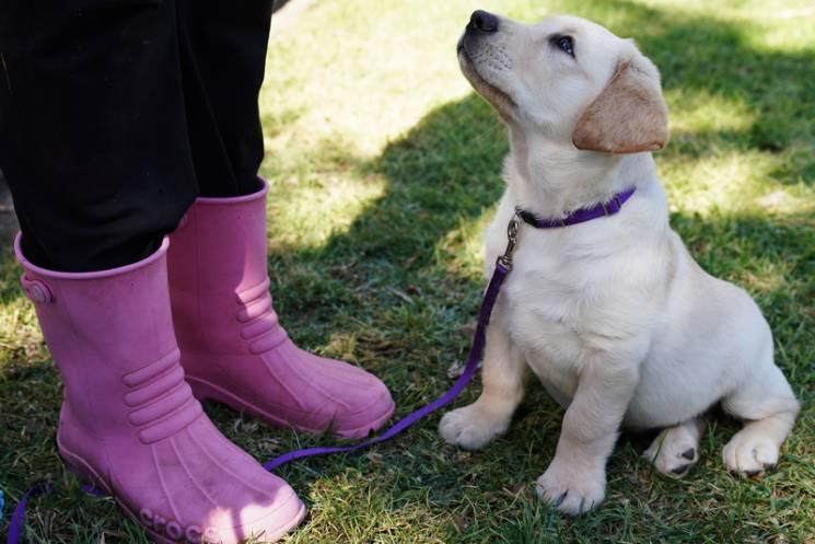 Останні вересневі: На одеситів чекають вихідні з собаками, яблуками та ковбасою