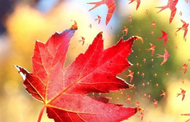 """Як 29 вересня, у день """"капустяних"""" вечірок, птахи допомагають дізнатися майбутнє"""