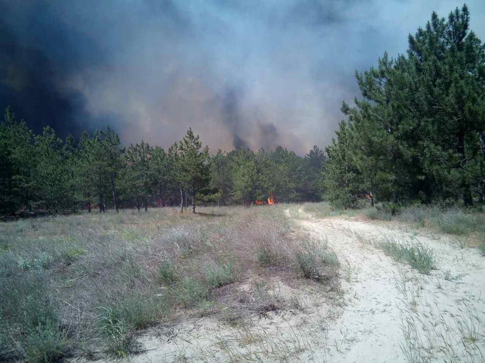 ДСНС: УХерсонській області горить 100 гектарів лісу